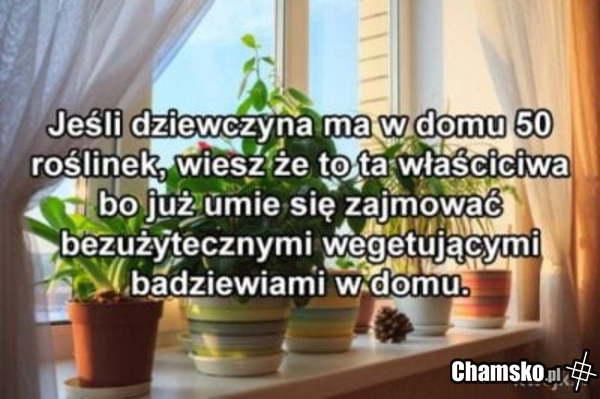 0_1_100438_Rosliny_przez_pluszowymis.jpg