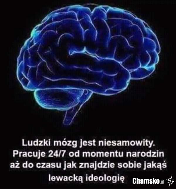 Ludzki mózg a lewactwo