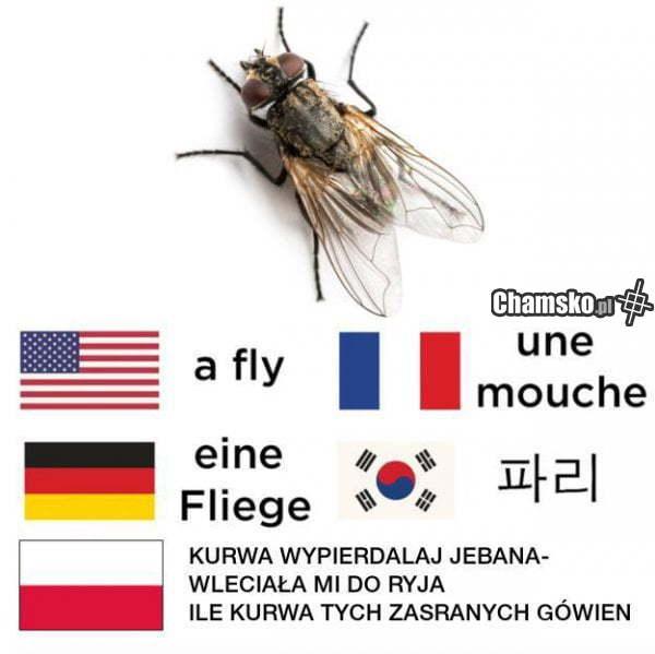 Mucha w różnych językach